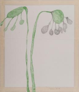 ZWEI BLUMEN Buntstift, Bleistift auf Papier 42 x 68 cm